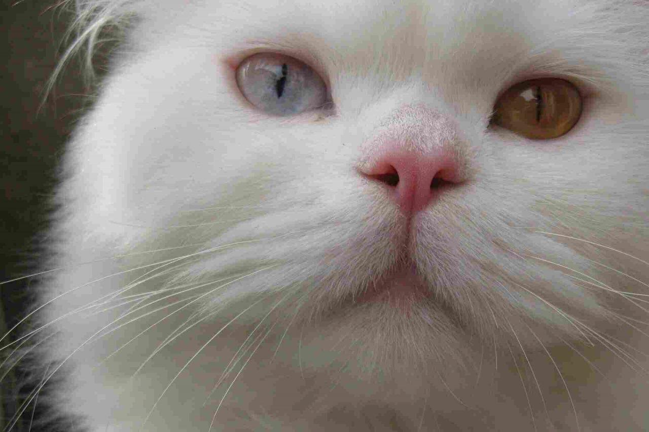 PETS-cats1-1280x853.jpg
