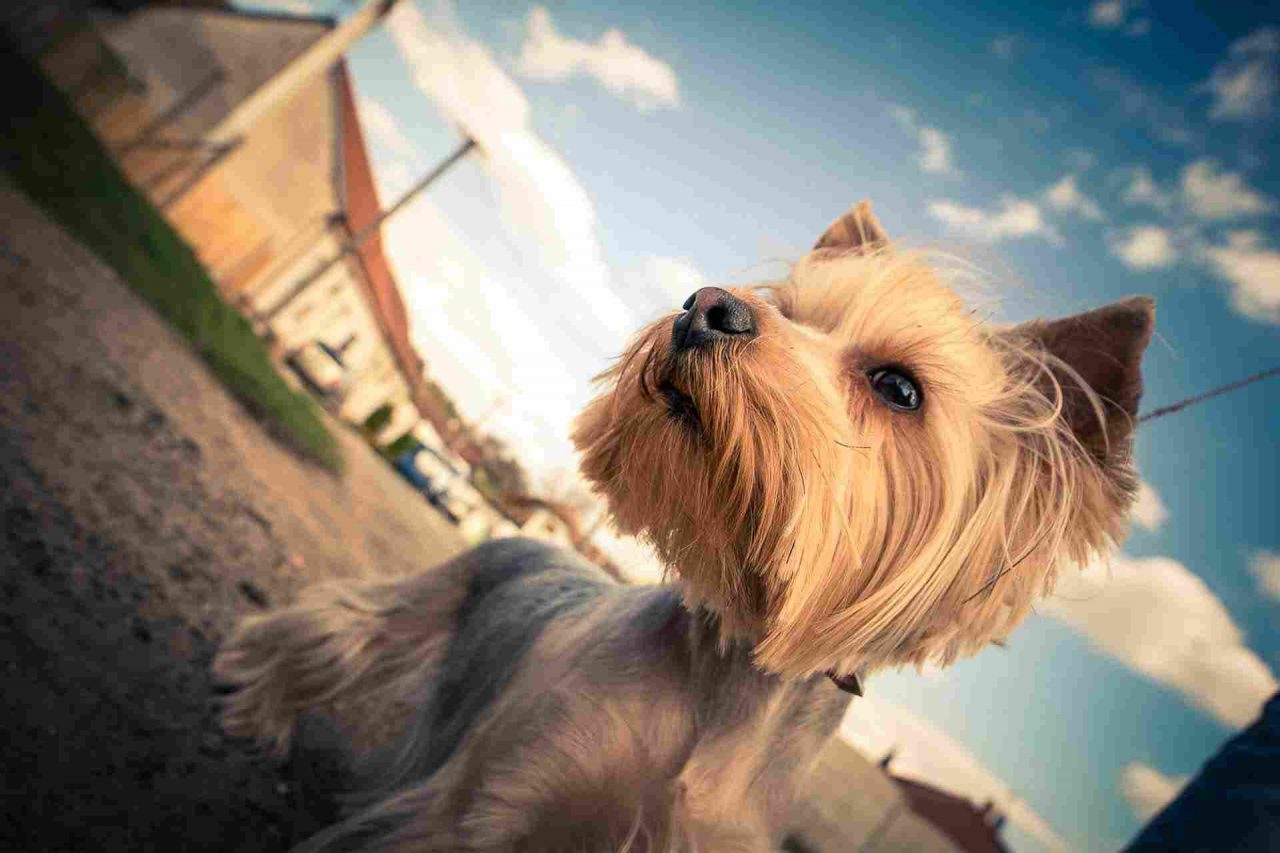 PETS-dog5-1280x853.jpg